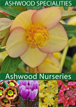 Browse Ashwood Nurseries' Plant Brochure Online